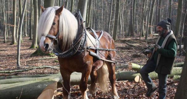 Mit dem Rückepferd in den Wald
